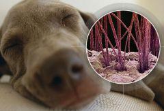 Владельцы животных должны защищать дом от аллергенов