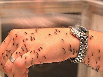 На острове Мадейра зарегистрировано 1357 случаев лихорадки денге