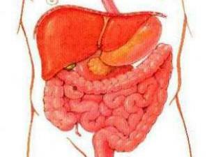 Ученые узнали, почему кишечную инфекцию непросто победить