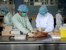 Россия запросила у Китая штамм вируса птичьего гриппа