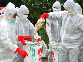 Количество заразившихся птичьим гриппом выросло до 126