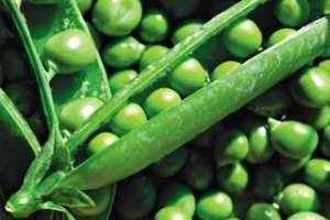 Употребление зеленого горошка приводит к укреплению иммунитета