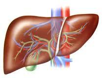 Гепатит В: обзор проблемы