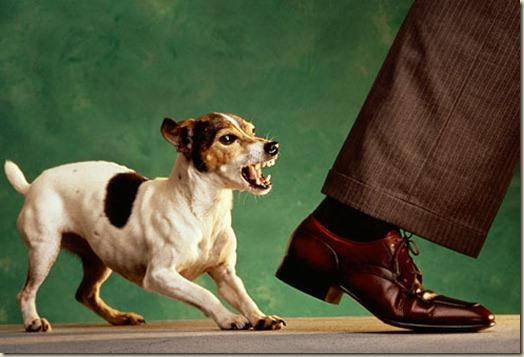 Собственническая агрессивность собак