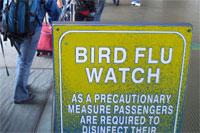 Похоже, птичьему гриппу теперь не нужны посредники