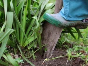 5 главных ошибок в поддержании сада