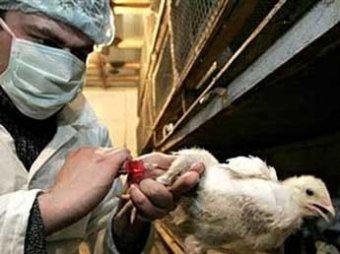 Ученые выяснили, почему птичий грипп стал опасен для человека
