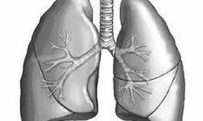 Медики: витамин E защищает легкие от загрязненного воздуха
