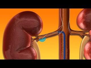 Клиническое значение эндотелиальной дисфункции у детей с рецидивирующим обструктивным бронхитом и бронхиальной астмой