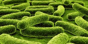 Бактериальные инфекции и заболевания