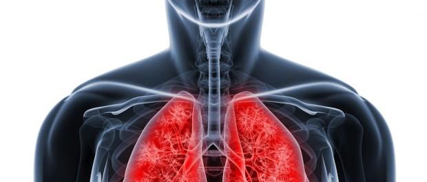 Выращенные в лаборатории «мини-легкие» помогут в лечении муковисцидоза