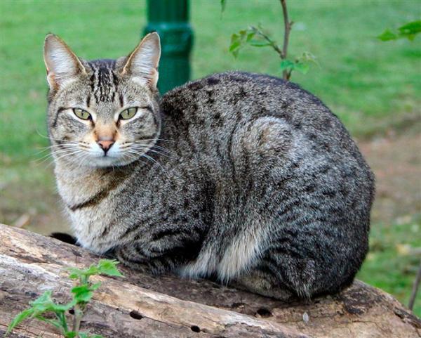 Инфекции от кошачьих укусов опасные для человека