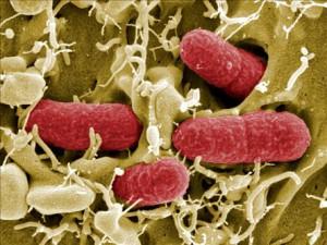 Ученым удалось расшифровать геном бактерии-возбудителя смертоносной кишечной инфекции