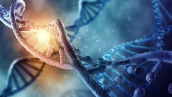«Спящие» вирусы в ДНК человека – подсказка для ученых