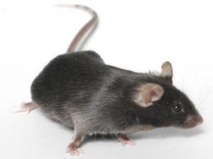 Разработан супер тест, определяющий наличие любого опасного вируса у людей и животных