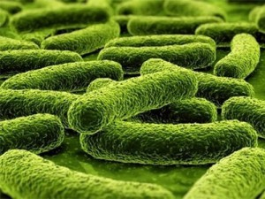Обнаружены кишечные бактерии, связанные с аутизмом