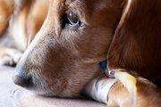 Встречается ли токсоплазмоз у животных?