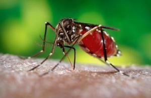 Более 2 млрд мужчин и женщин могут заразиться лихорадкой Зика, — ученые