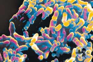 Микоплазма: нормальные показатели и титры