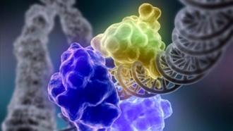 Ученые сообщили, что иммунные заболевания опасны для психики
