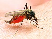 Ученые приблизились к созданию идеального лекарства от малярии