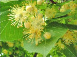 Ограничение контакта с природой приводит к воспалению, аллергии и астме