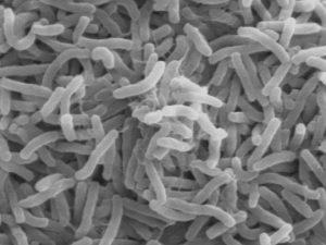 Лечение холеры традиционными методами