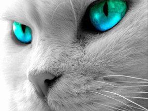 80% кошачьих укусов грозят инфекциями