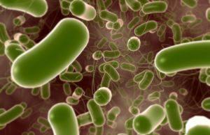 Кишечная инфекция стафилококковой этиологии