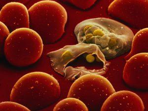 Новое лекарство против малярии повышает вероятность выздоровления в два раза