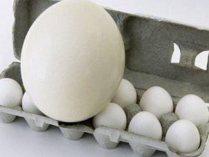 Страусиные яйца помогут в борьбе с больничными инфекциями