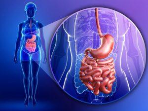 Улучшить работу кишечника и укрепить иммунитет: полезные и доступные продукты!