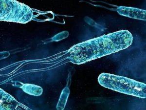 Известная кожная бактерия оказалась причиной лимфоцитарного гастрита