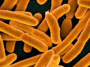 16-летняя девушка умерла от инфекции энтерогеморрагической кишечной палочки Escherichia coli