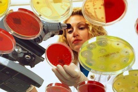 Муравьи и грибок вдохновили на создание новых антибиотиков