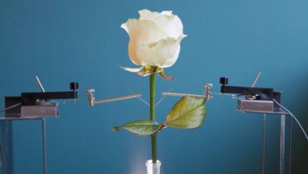 Ученые создали цифровые растения