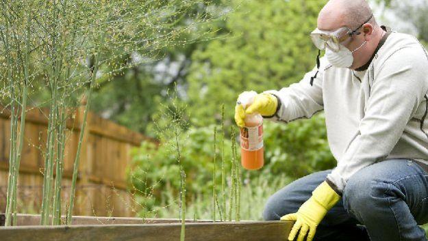 Токсичные сорняки – угроза весеннему отдыху