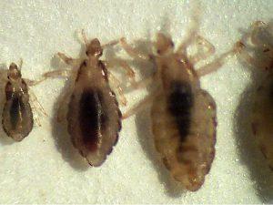 Инфекции, вызываемые паразитами