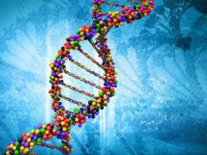 Ученые расшифровали генетический код ВИЧ инфекции