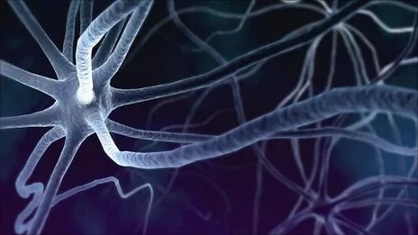 Ученые модифицировали клетки кожи в нейроны