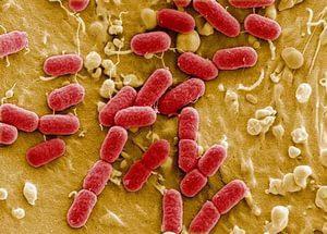 Немецкие и китайские ученые расшифровали геном возбудителя кишечной инфекции