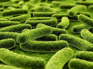 У некоторых бактерий обнаружился новый механизм деления