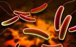 Симбиотические кишечные бактерии: новые доказательства влияния на биохимию мозга и поведение
