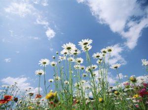 Семь лучших трав — полезнее и дешевле любого лекарства