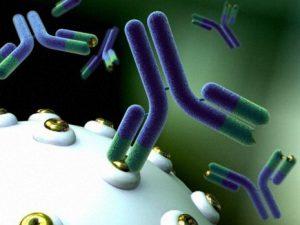 Антитела могут защитить от ВИЧ-инфекции
