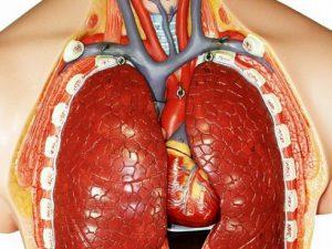 Микрофлора легких защищает орган от инфекционных заболеваний