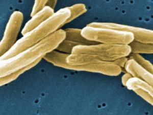 Ученые: глобальная пандемия может начаться с Америки