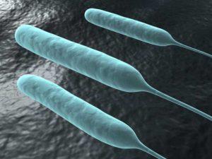 У бактерий обнаружили новую форму «памяти»