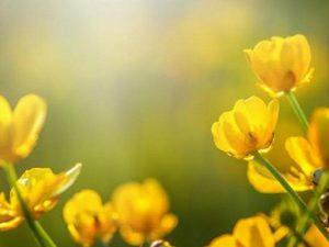 Для борьбы с аллергией на пыльцу ученые используют пластырь