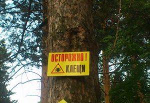 В Пермском крае клещи покусали 660 человек
